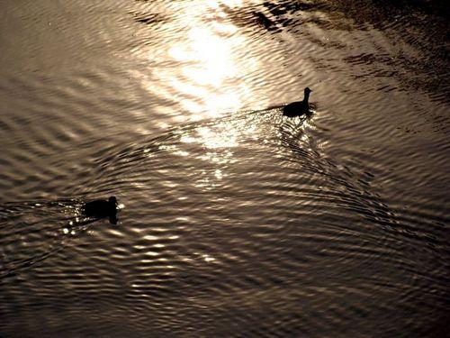 夕方の運河にて.jpg